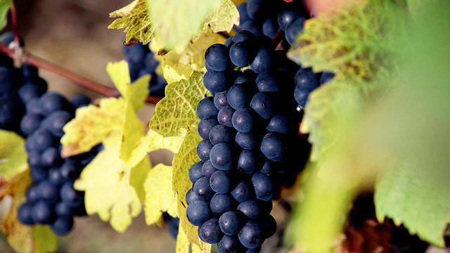 Spanje koploper in Europese wijnbouw