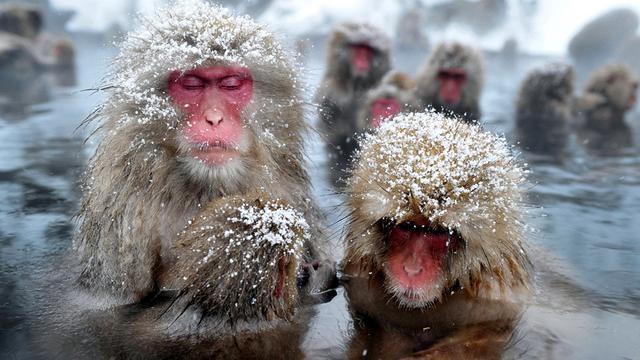 Ruim 50 doden in Japan door zware sneeuwval