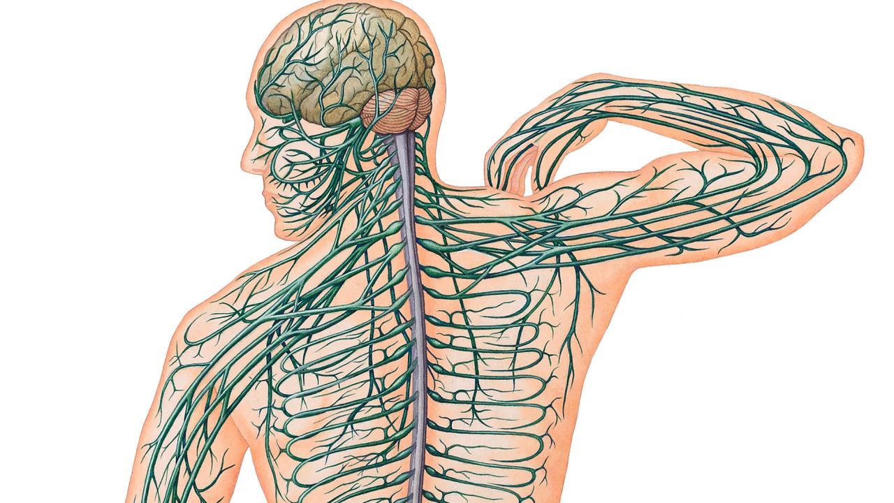 zenuwpijn been