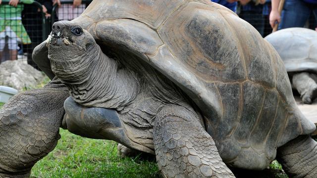 Concurrentie nekt pretparken en dierentuinen