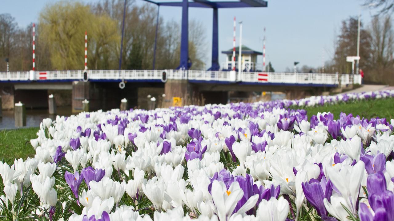 Nederlandse Bloemen Boycot Nederlandse Bloemen