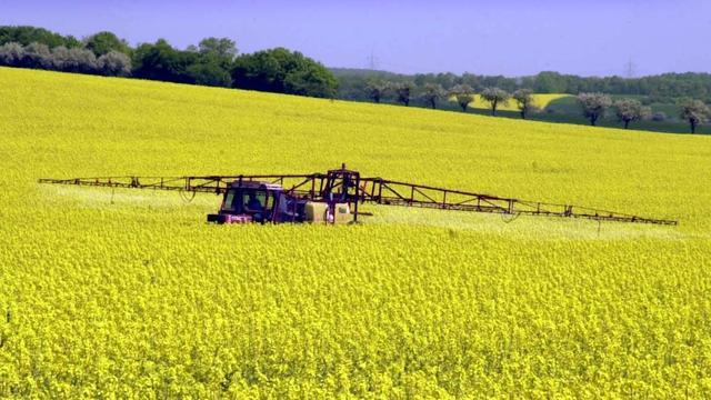 Omstreden onkruidverdelger blijft voorlopig toegestaan door EU