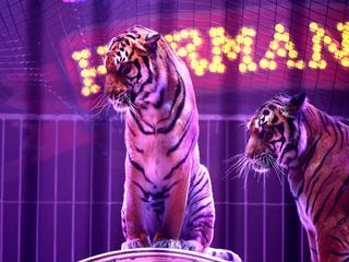 Bestuurders willen verbod op wilde dieren in circus