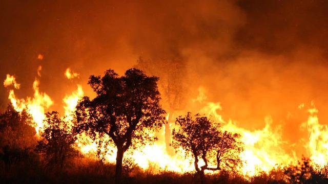 Branden verwoesten tienduizenden hectare Algerijns bos