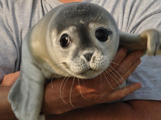 Zeehondenopvang Pieterburen vraagt kabinet om extra geld