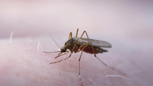 Dengue-uitbraak in Puerto Rico