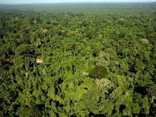 Greenpeace niet gerust op controle douane van Braziliaans hout