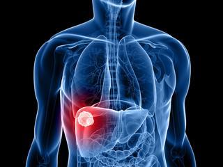 Gekweekte stamcellen kunnen mogelijk donororganen vervangen