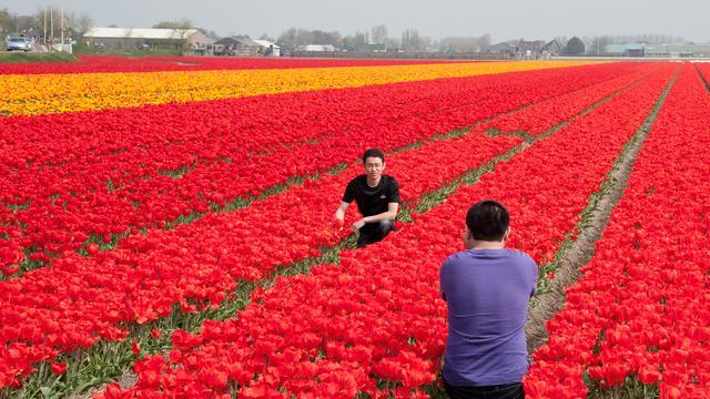Recordaantal toeristen bezocht Nederland