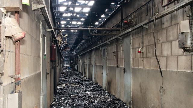 Vijfhonderd varkens dood door brand