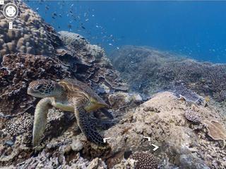 Panoramische foto's van koraalriffen te zien in Google Maps