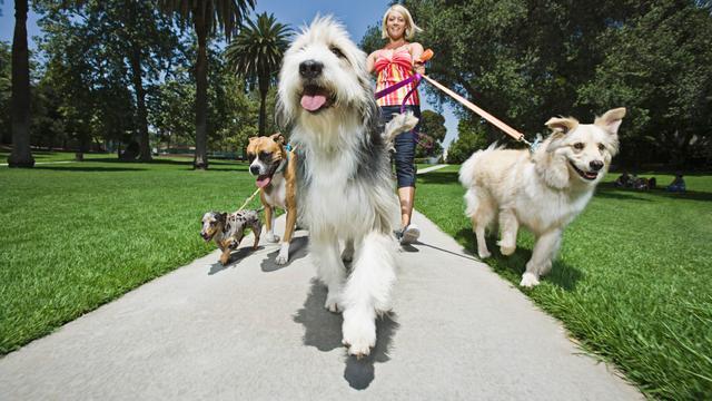 Hondenbelasting mag van de Hoge Raad