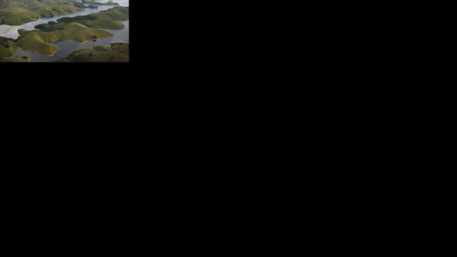 Nieuwe stekelvarkensoort ontdekt in Brazilië
