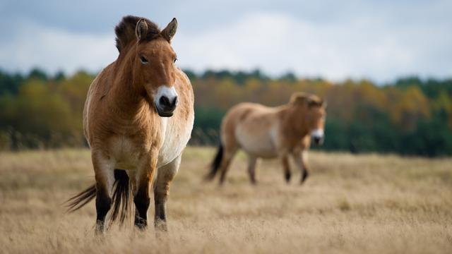 'Paarden ontstonden vier miljoen jaar geleden'