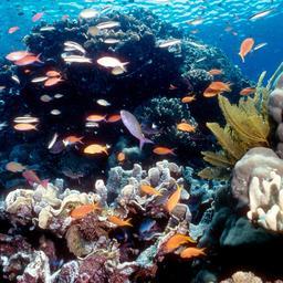 Onbekend rif ontdekt achter Great Barrier Reef