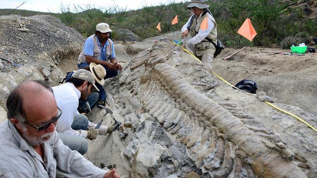 Complete dinosaurusstaart gevonden in Mexico