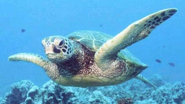 Lampjes aan netten redding voor schildpadden