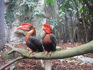 Gestolen vogels