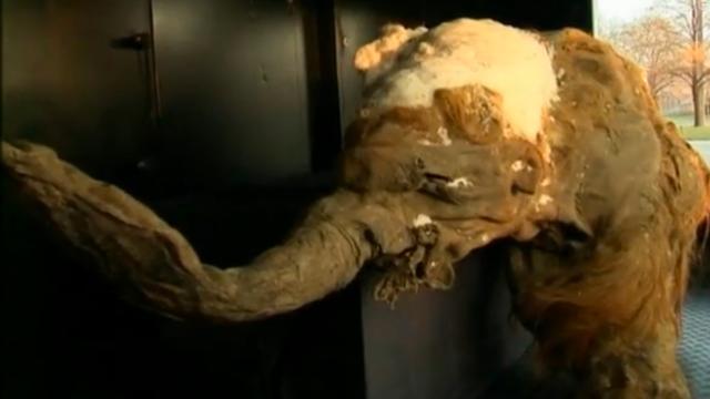 39.000 oude mammoet in Moskou