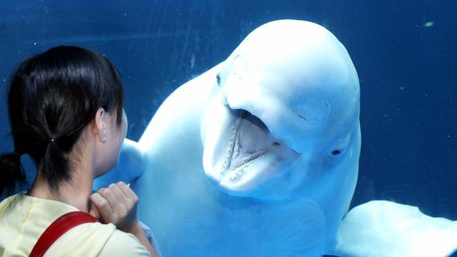 Geboorte witte walvis op beeld vastgelegd