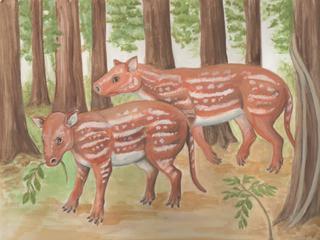Hoefdier leefde 54 miljoen jaar geleden