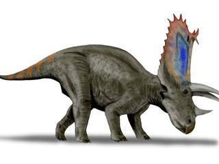 Pentaceratops aquilonius leefde 75 miljoen jaar geleden