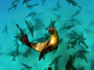 Foto van een poserende zeeleeuw wint de prijs