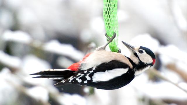 'Zangvogels maken sneeuwtunnels voor de lol'
