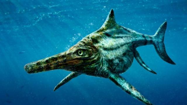 Zeldzaam compleet skelet van Ichthyosaurus blootgelegd