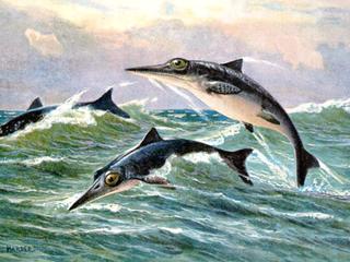 Vondst wijst op versnelde evolutie na massa-uitsterving