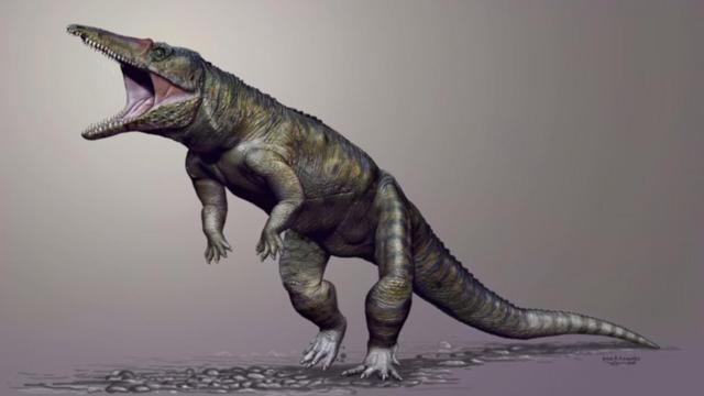 Prehistorische krokodil liep op achterpoten