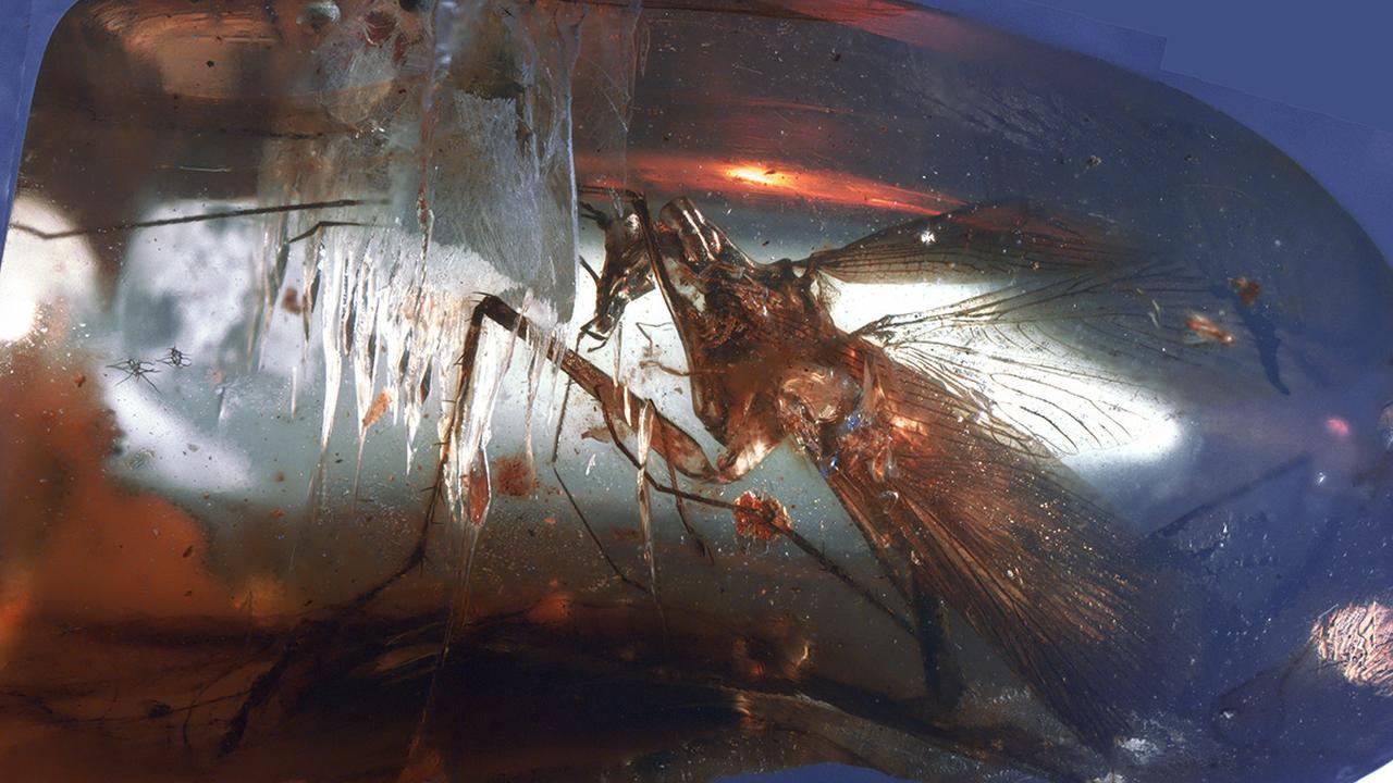 Arts haalt kakkerlak uit oor Chinese vrouw