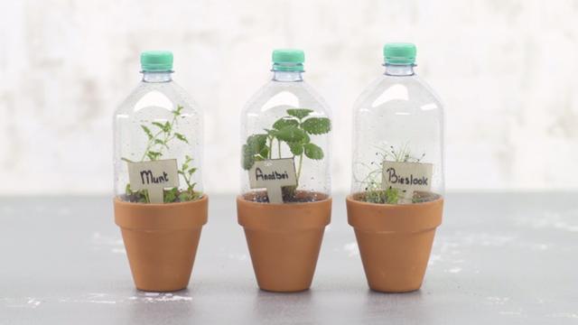 Zelf maken: een miniplantenkas laat kruiden sneller groeien