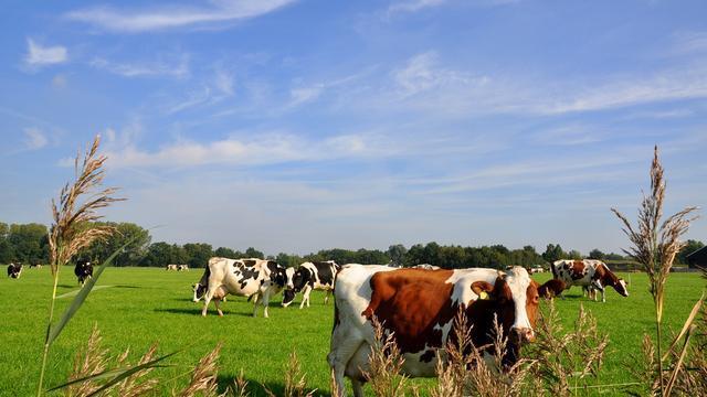 FrieslandCampina biedt melkveehouder hogere toeslag voor weidemelk