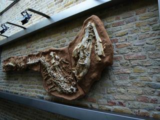 Skelet gevonden in Maastricht