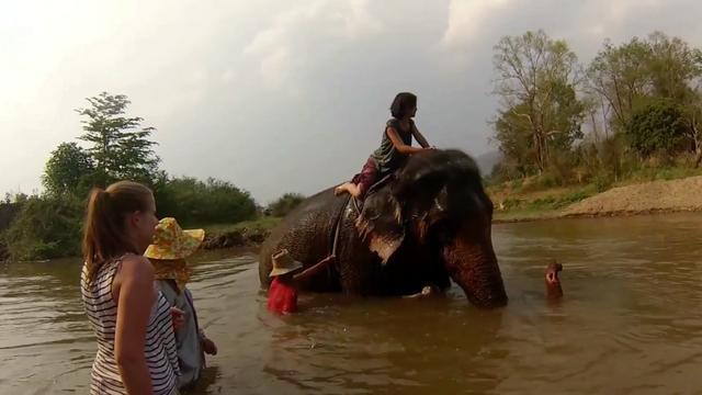 Deze toeristische uitstapjes worden afgeraden door dierenorganisaties