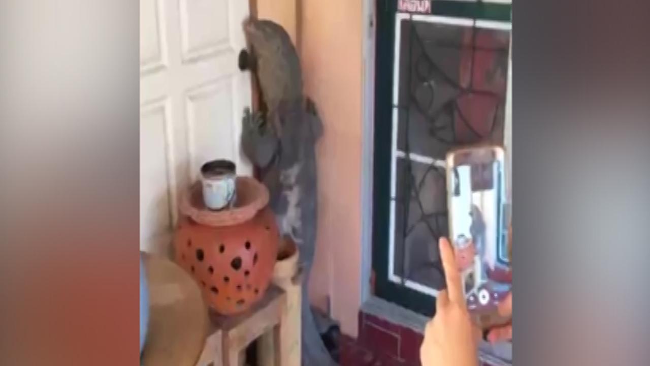 Thaise man treft gigantische varaan aan bij voordeur huis
