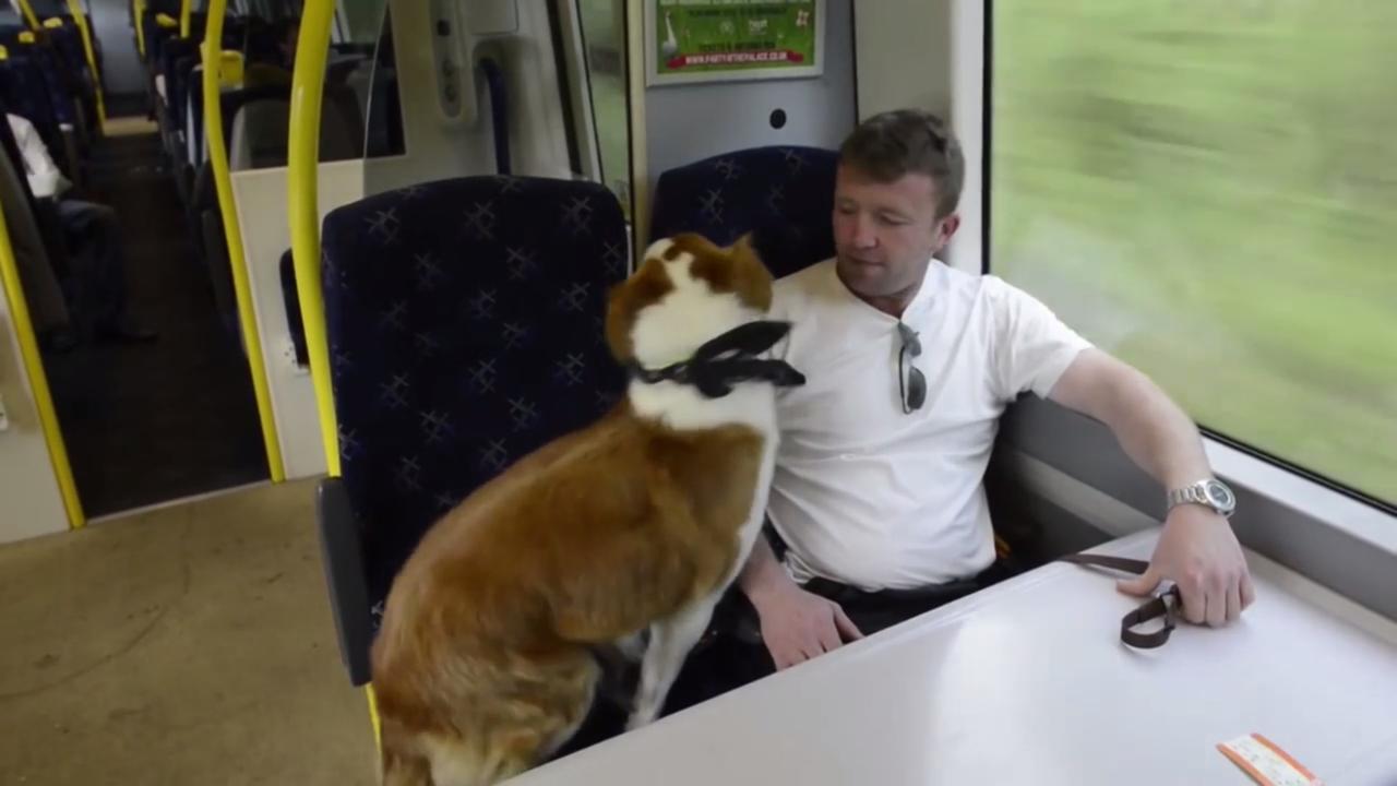 Man komt eigen hond tegen in de trein
