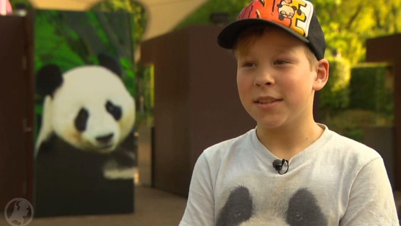 Megafan Vince (9) mag eindelijk op bezoek bij de reuzenpanda's