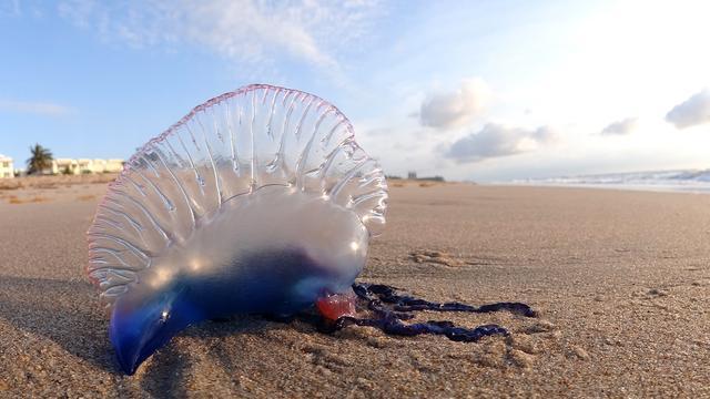 Alarm op Britse stranden wegens aanspoelen 'Portugees oorlogsschip'