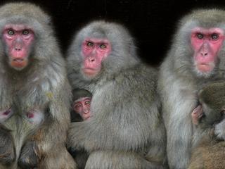 Onderzoekers ontdekking verboden kruising van soorten