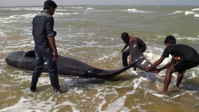 Tientallen grienden spoelen aan op zuidelijke kust India