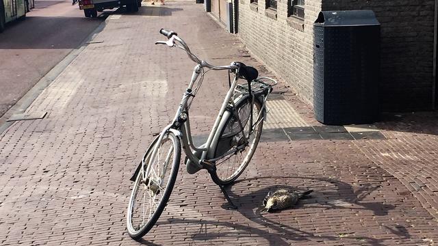 Meeuw overleeft aanrijding met fiets niet