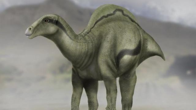 Dinosaurus met 'kamelenbult' opgegraven