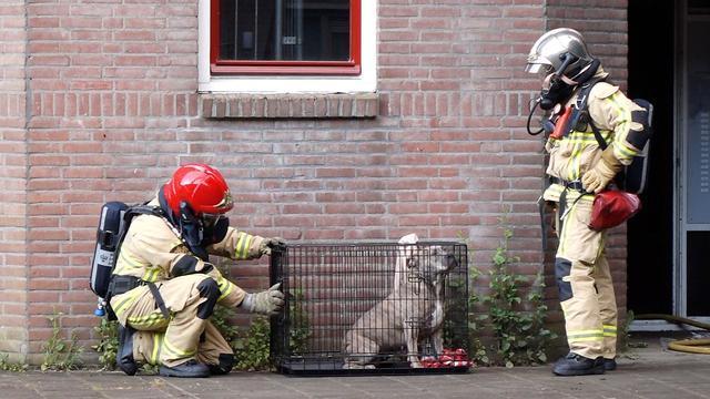 Brand in woning met hennepkwekerij in Zuidoost