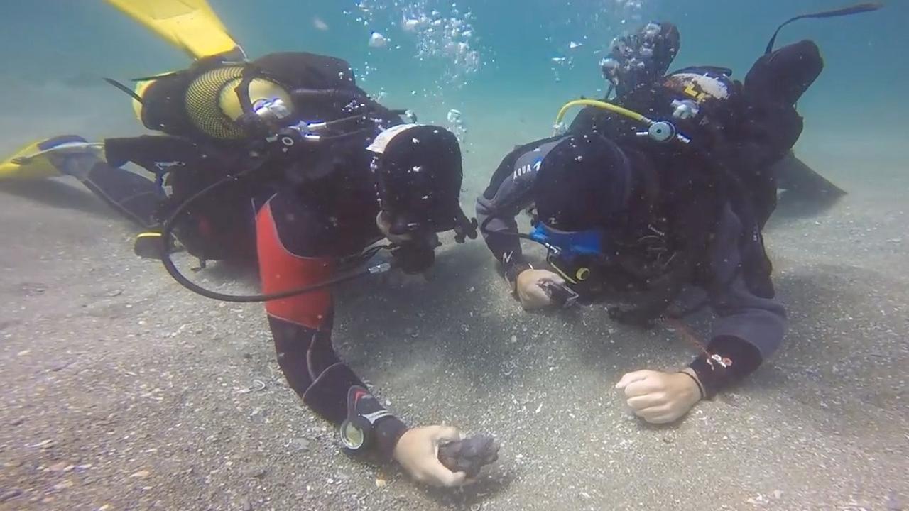 Israëlische duikers vinden schat op bodem Middellandse Zee