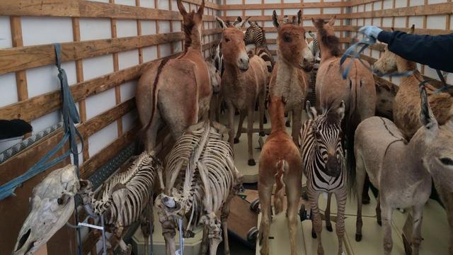 Naturalis verhuist depotcollectie naar Darwinweg