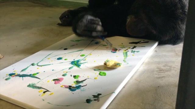 Galerie in VS toont door apen gemaakte kunstwerken