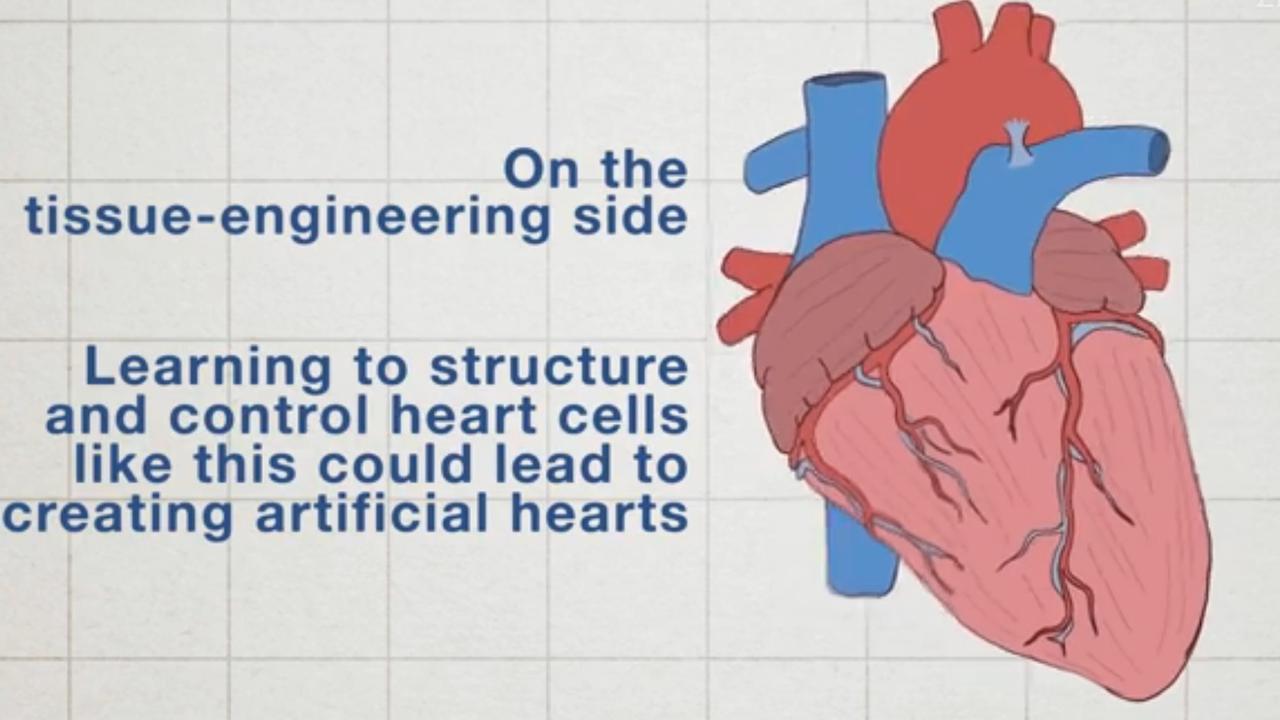 Robotrog met gouden skelet zwemt dankzij hartspiercellen