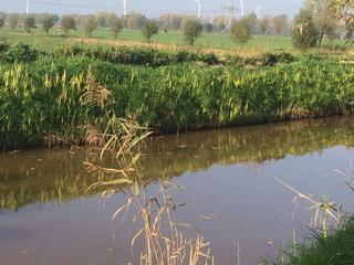 Maatregel moet wateroverlast beperkt houden
